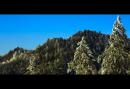 Pines Grove