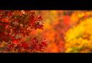 Autumn Sigh
