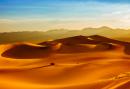 Dune Rolls